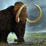 Senzaţional! Inscripţie sacră şi dinte de mamut, lângă Caransebeş
