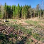 Începe să ne pese de pădure…