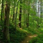 Pădurea Caransebeşului rămâne la Păltiniş