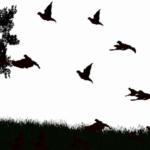 Păsări negre