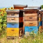 Calendarul lucrărilor apicole, pe luni