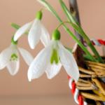 8 Martie, o zi cu nimb de sărbătoare