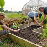 Sprijin de 15.000 de euro pentru dezvoltarea exploatațiilor agricole de mici dimensiuni