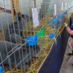 Aripioare şi blăniţe la Caransebeş