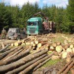 Anul trecut, cărăşenii au ars 27.000 mc de lemn
