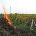 Prevenirea incendiilor la utilizarea focului deschis  la arderile de mirişti, vegetaţie uscată şi resturi vegetale